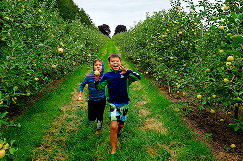 Two excited young boys running through the rows of an apple orchard.