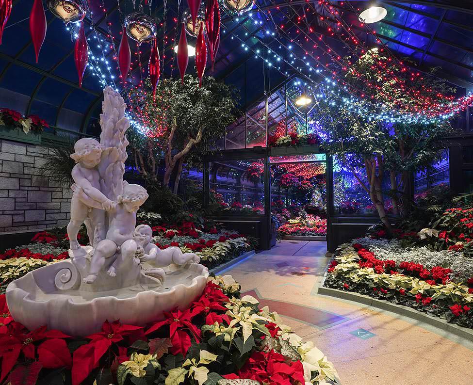 An illuminated indoor floral showcase