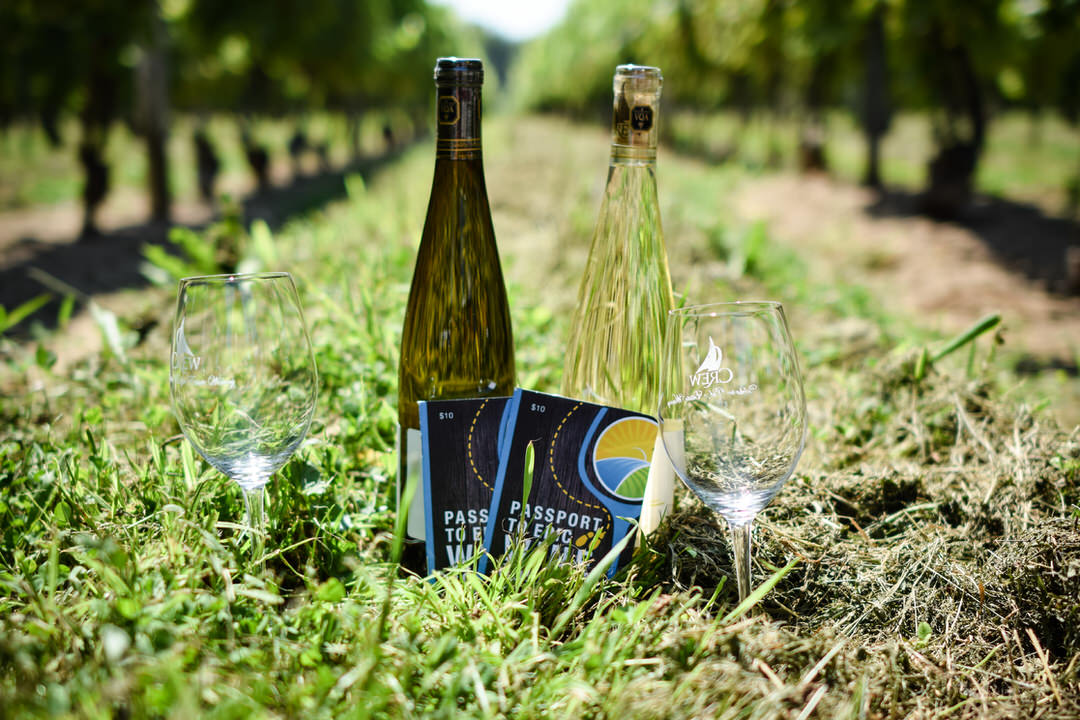Two wine bottles and wine glasses on the ground at a vineyard