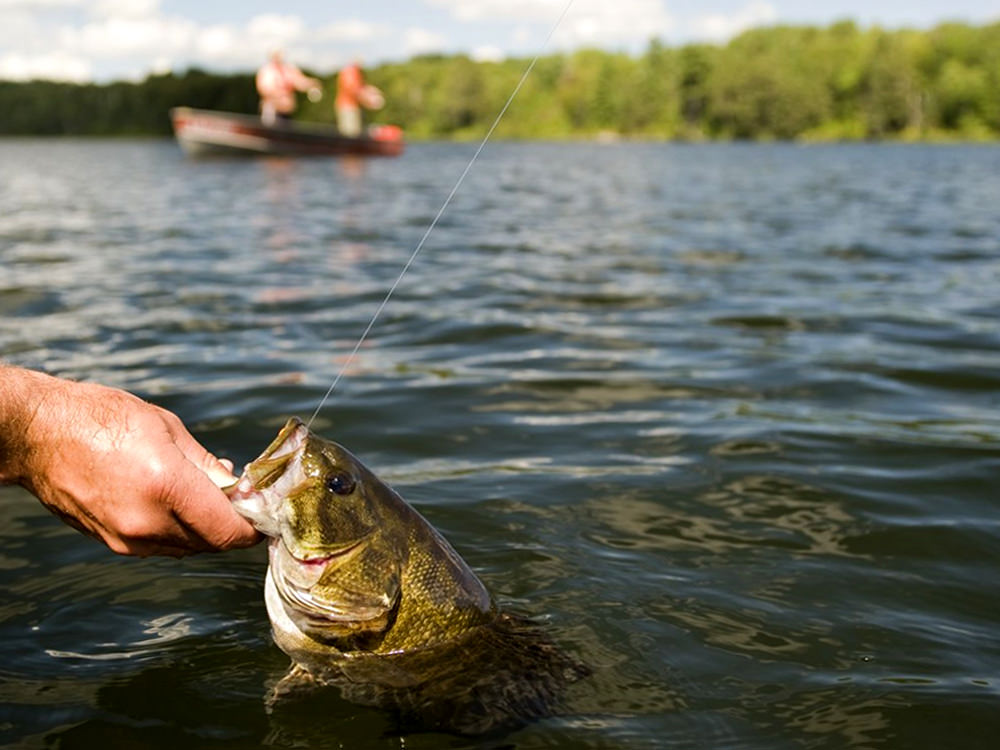 An angler practices catch and release with a fish
