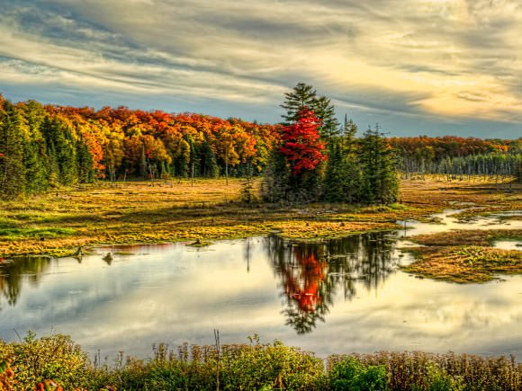 A colourful forest beside a body of water