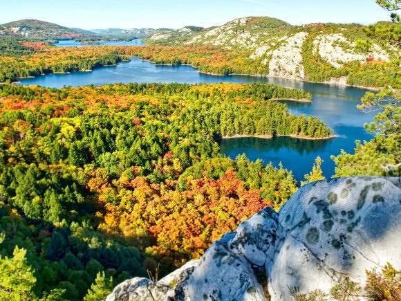 Arbres entourés de collines et du lac