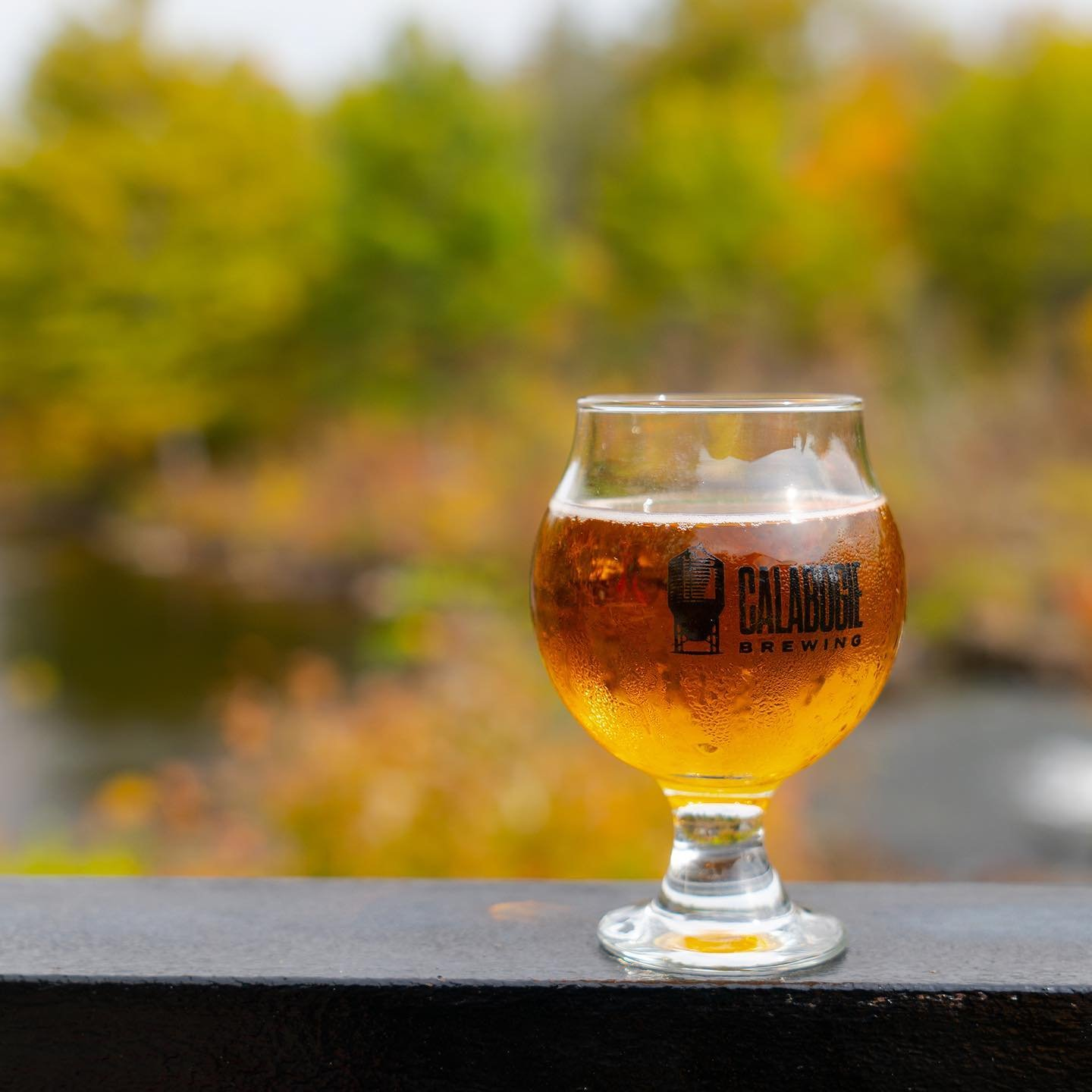 A sweating glass of pale ale on a ledge with autumn colours in the background
