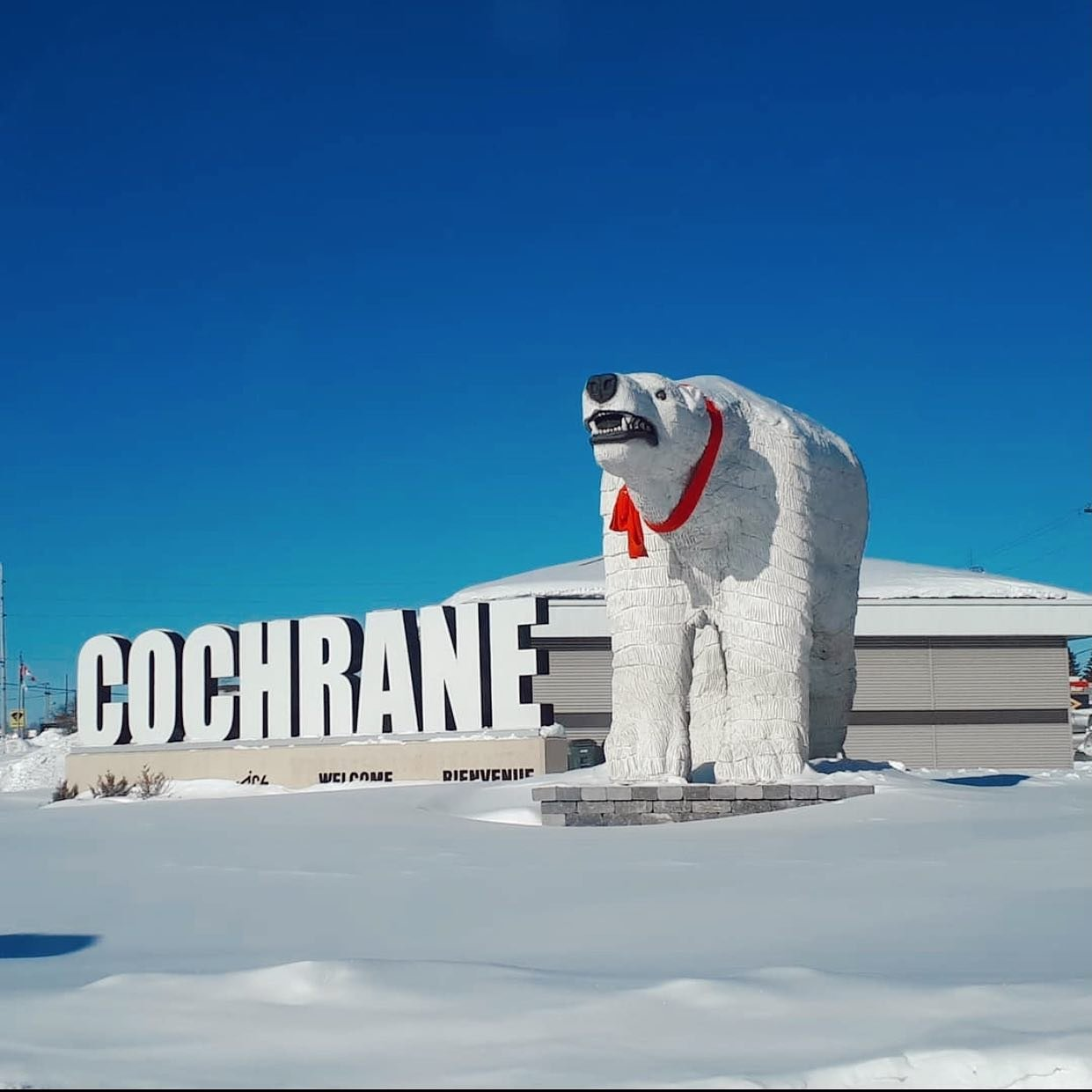 A Polar Bear statue beside a statue of the word Cochrane covered in a layer of snow welcoming people to the city