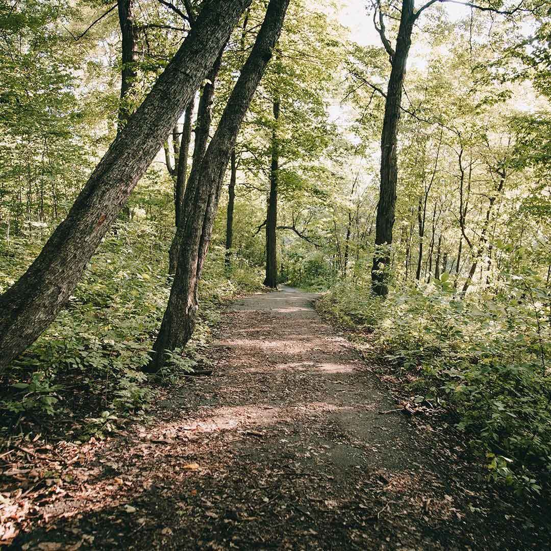A paved biking path through a forested area