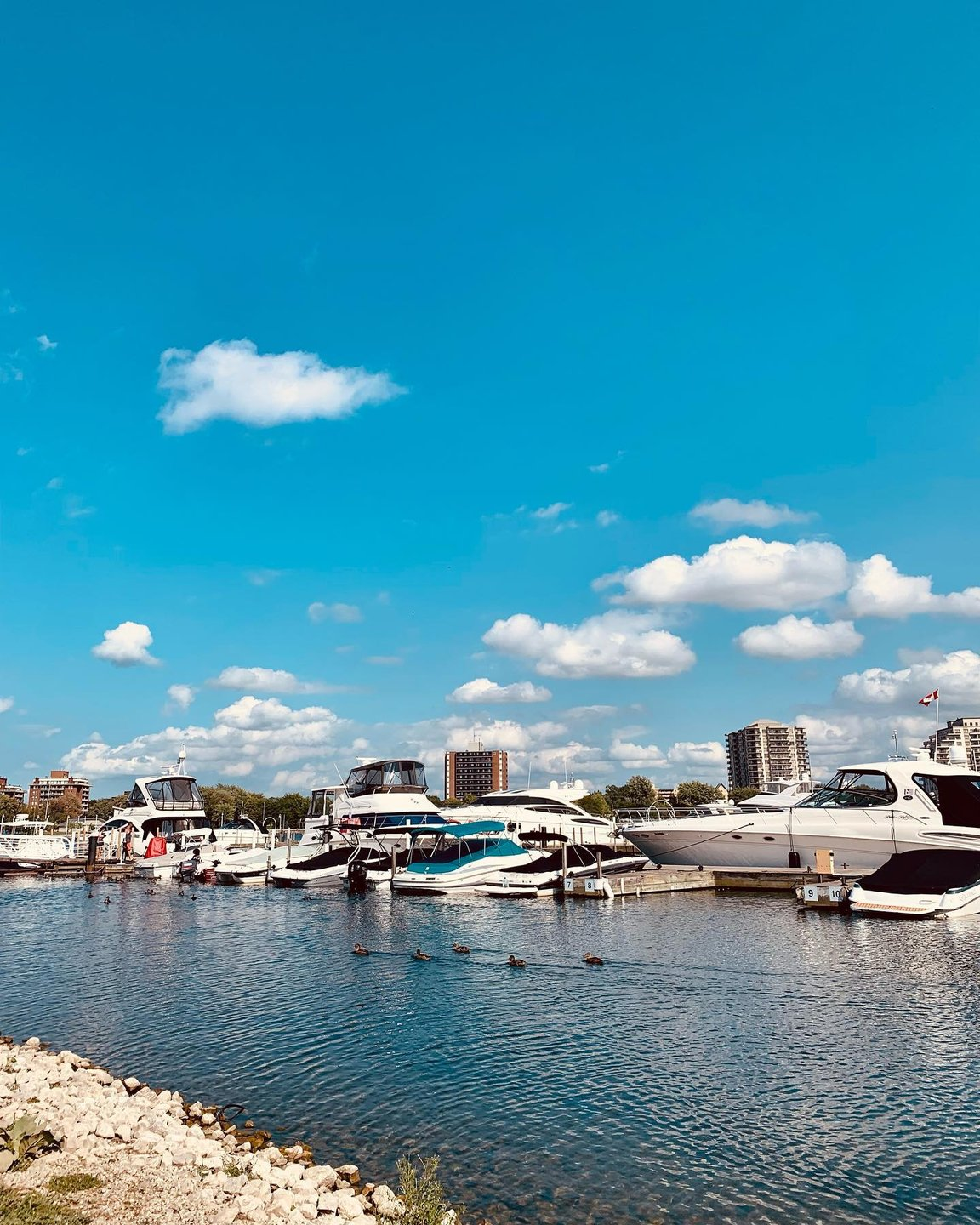 A bright blue clear sky with a few clouds above a multitude of luxury boats moored at a marina