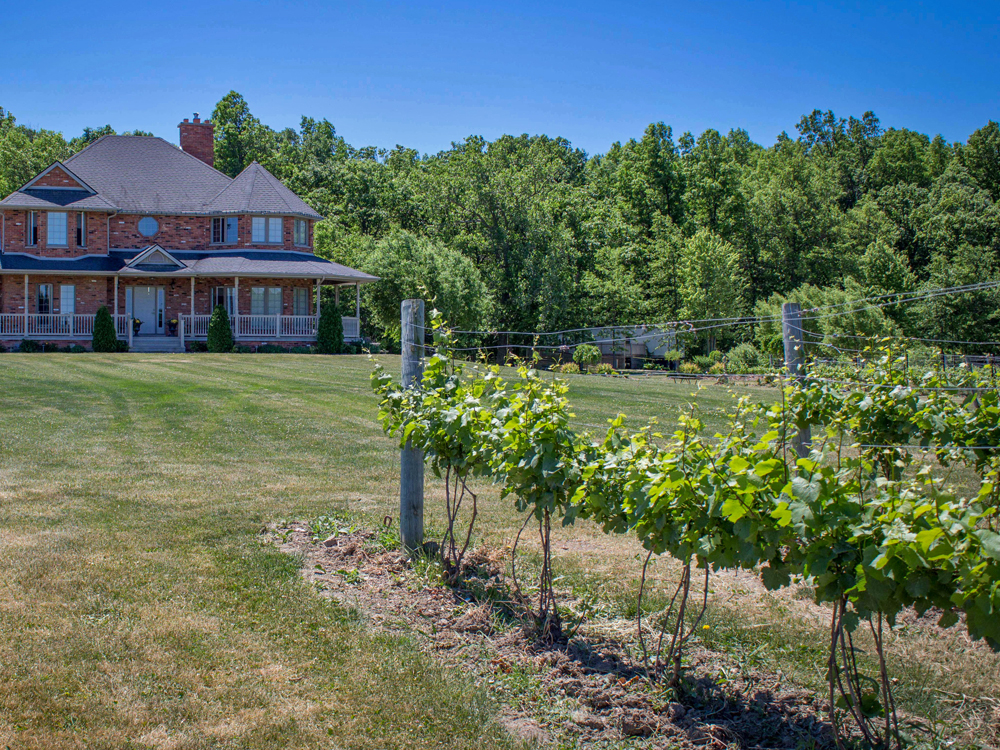 A row of grape vines in front of a large estate building