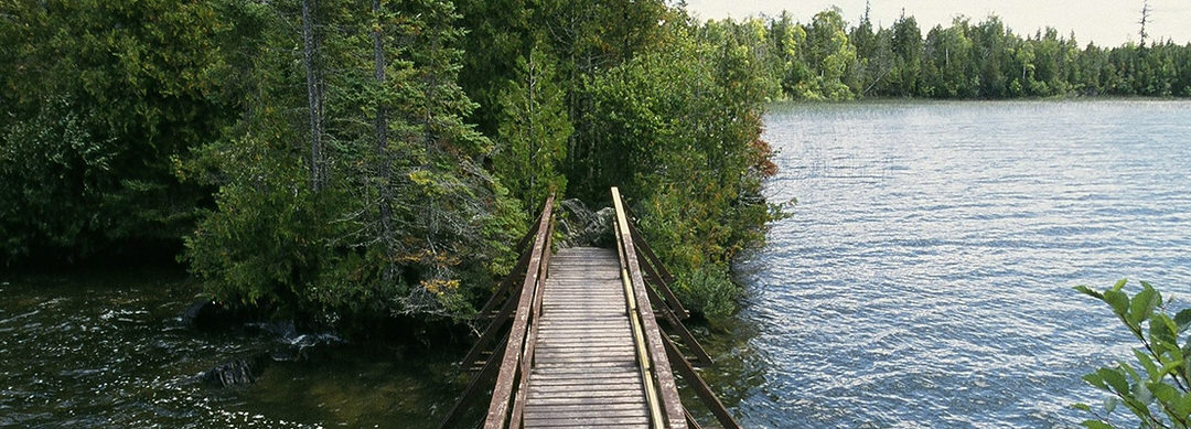 A wooden walking bridge just above the water heading into the trees