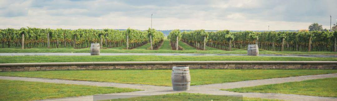 Un vignoble aux allées bordées de tonneaux de vin