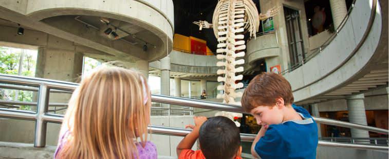 3 kids admiring dinosaur skeletal fossils.