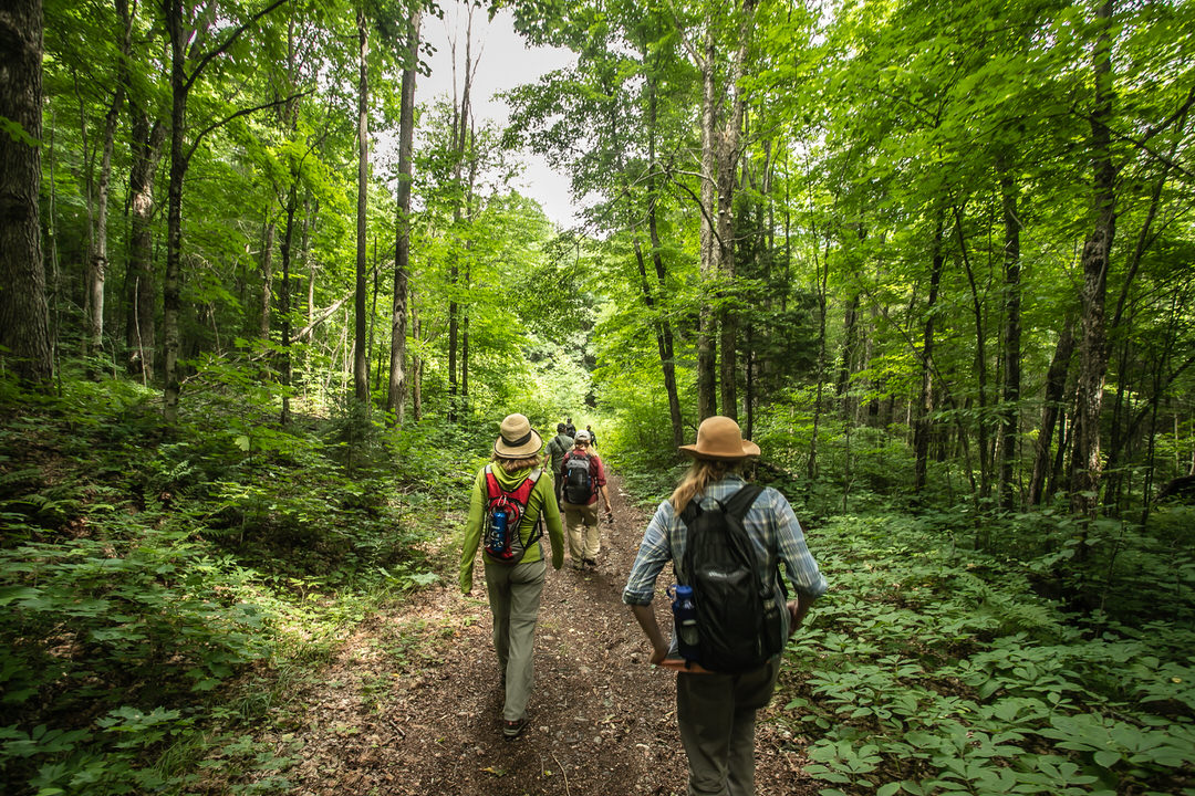 A group of people hiking along a forest trail