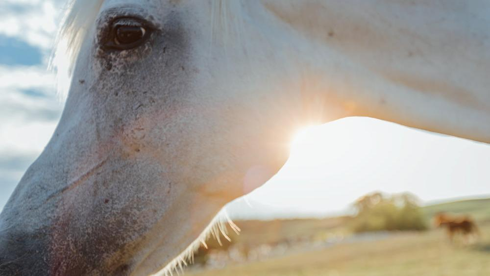 Side view of a horse's head with the sunset in the background
