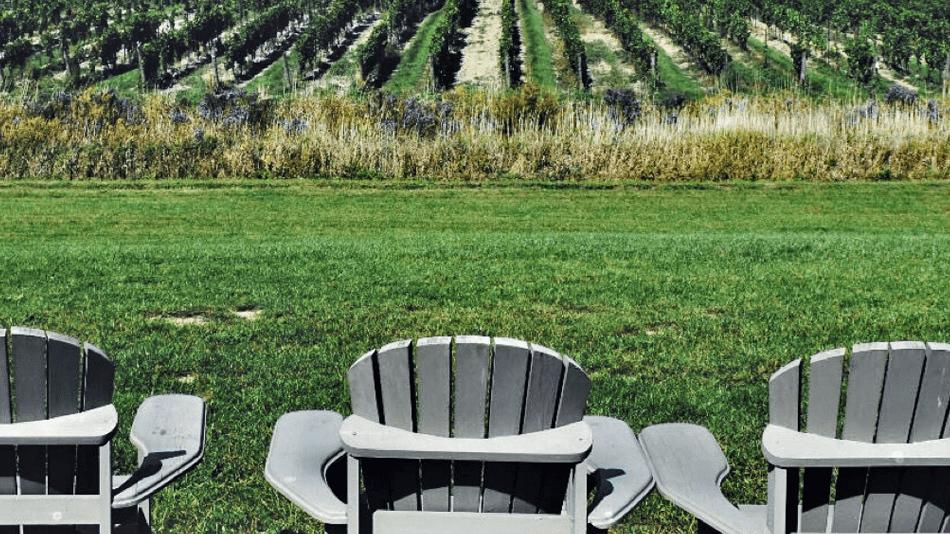 Muskoka chairs facing a vineyard