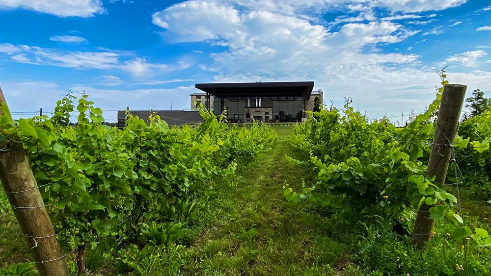 Lush green vines grow in front of a winery estate