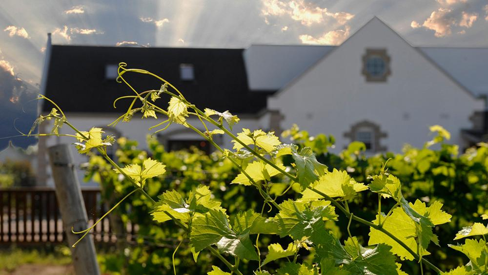 Sun rays break through the clouds over a winery and vineyard