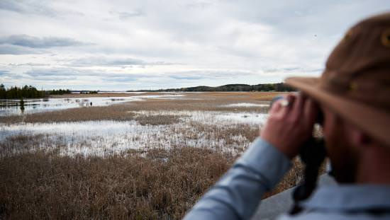 A man is birdwatching over a marsh with binoculars