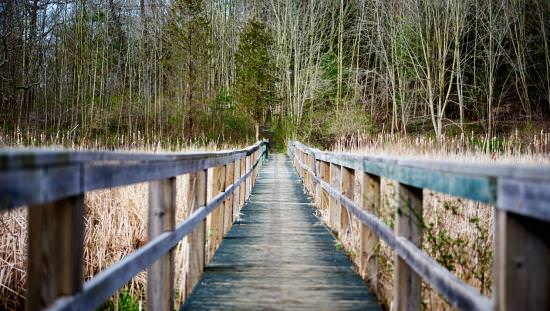 A wooden bridge crosses a marsh and leads into a forest