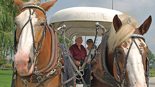 An older couple in a covered horse drawn carriage pulled by two horses.