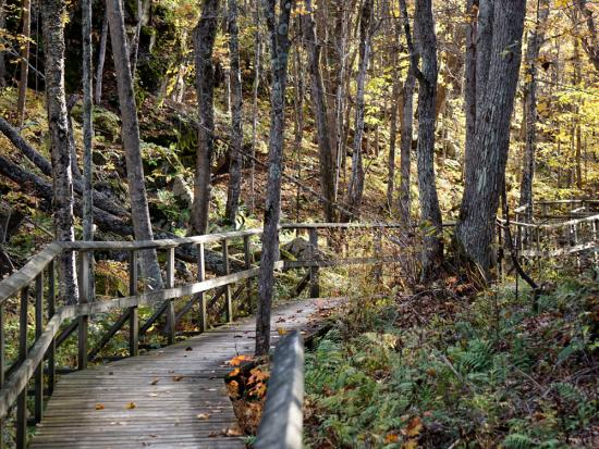 A boardwalk trail leads through the forest