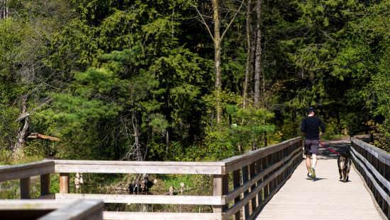 Man with dog crossing old board bridge over waterway towards far woods