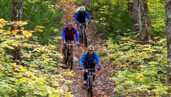 3 cyclists riding on a trail in the forest.