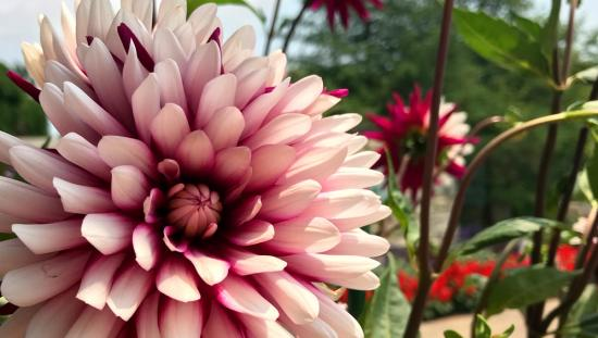 Gros plan d'une magnifique fleur