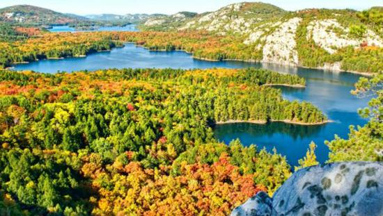 View of a forest in gorgeous bright fall colour with lakes and mountains beyond