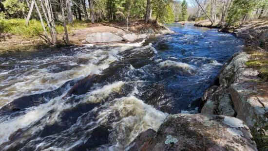 Rapides arides descendant la rivière entre des arbres.