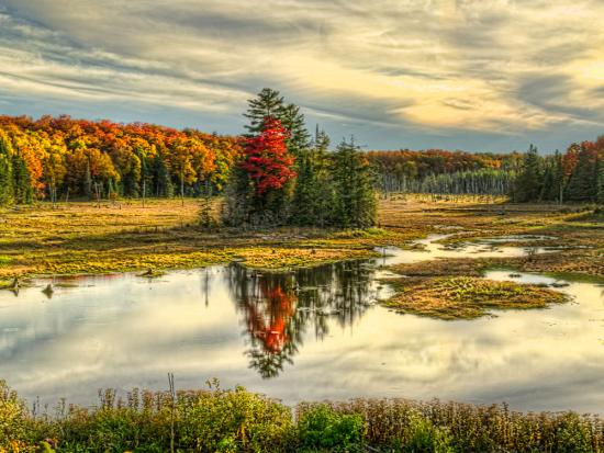 Stunning fall colour reflected in a lake in Algonquin Park