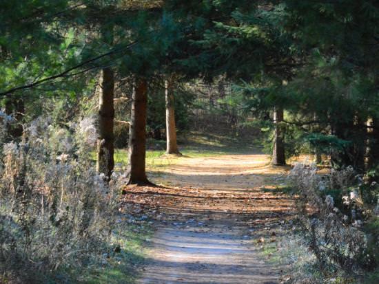 Un chemin qui mène à travers les bois