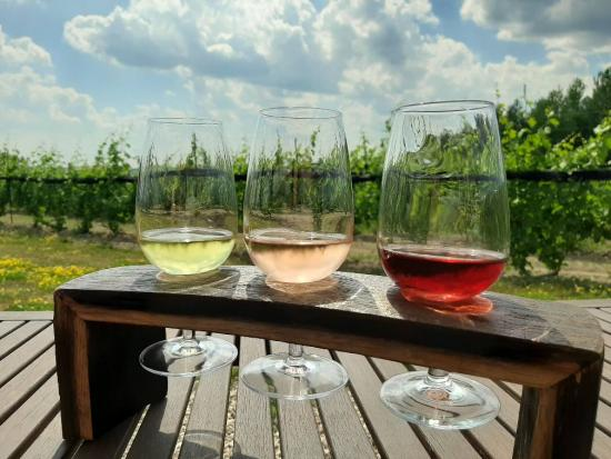 Un envol de trois vins de dégustation différents sur une table face à un vignoble