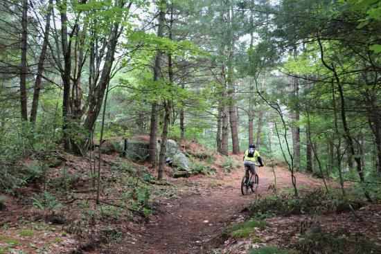 Mountain biker on a path surrounded by tall trees