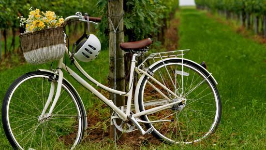 Un vélo blanc s'appuie contre un poteau dans un vignoble