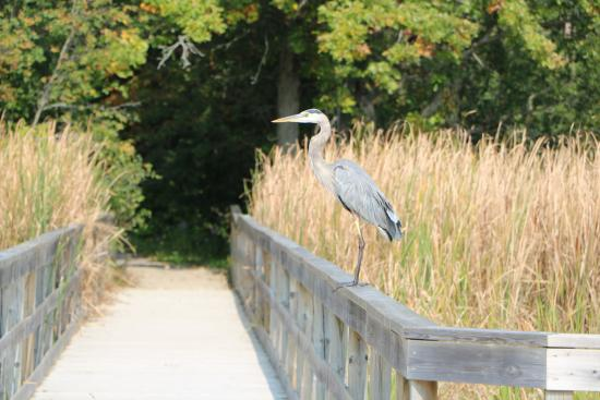 A bridge leading to a forest as a bird watches on