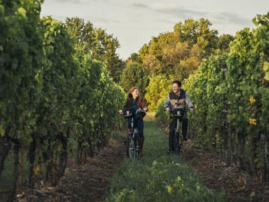 Un homme et une femme font du vélo dans un vignoble