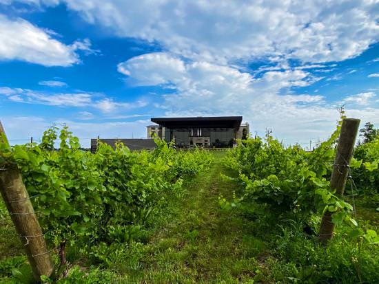 Des vignes verdoyantes poussent devant un domaine viticole