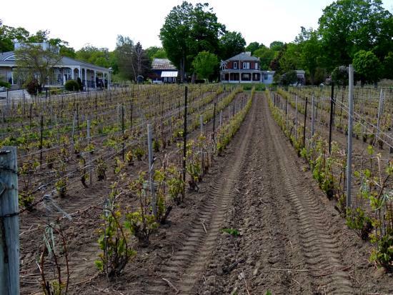 Des rangées de vignes récemment plantées mènent à une maison seigneuriale