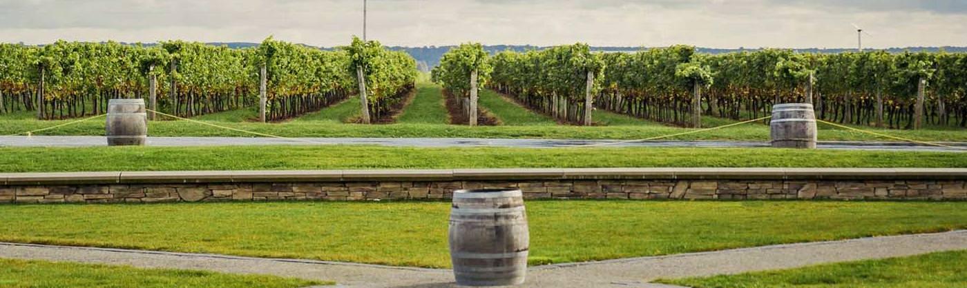 Wine barrels are used as sampling tables in a vineyard