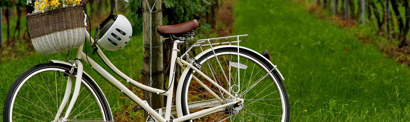 A white bicycle leans against a post in a vineyard